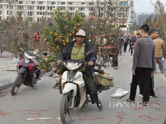 Quảng Ninh: Chở thuê đào, quất Tết, hái ngon ơ tiền triệu/ngày - 6
