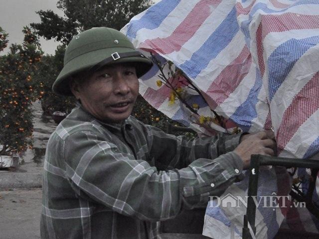 Quảng Ninh: Chở thuê đào, quất Tết, hái ngon ơ tiền triệu/ngày - 9