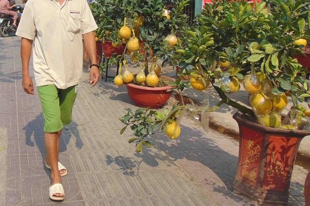 Coi chừng rước bệnh vào thân khi dùng trái kiểng - 2