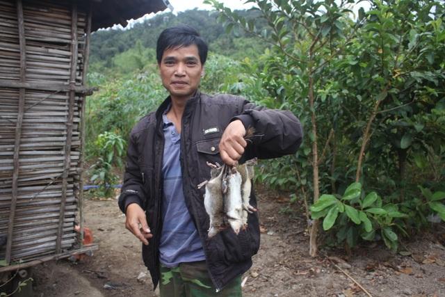 Xuân về, theo chân người dân bản địa săn chuột rừng - 4