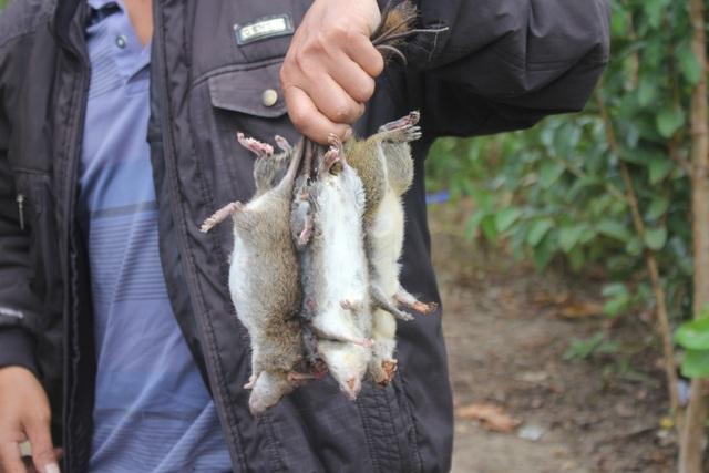 Xuân về, theo chân người dân bản địa săn chuột rừng - 5