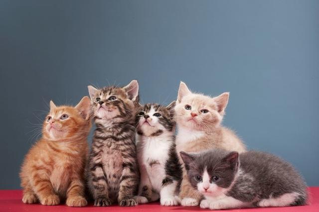Kí sinh trùng lây từ mèo có thể dẫn tới bệnh tâm thần phân liệt - 1