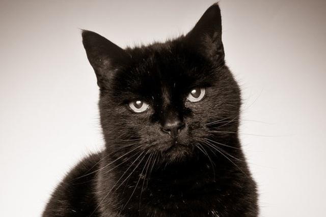 Kí sinh trùng lây từ mèo có thể dẫn tới bệnh tâm thần phân liệt - 2