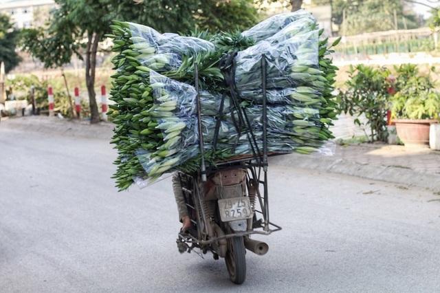 Lạc giữa cánh đồng hoa ly lớn nhất Hà Nội những ngày giáp Tết - 7