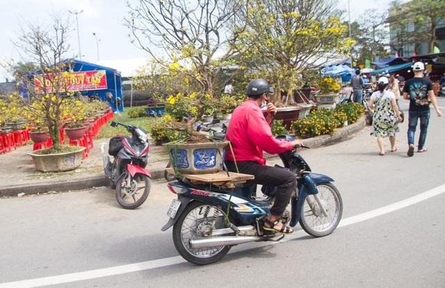 Chợ hoa Đà Nẵng 29 Tết: Quất cảnh đắt hàng, mai thưa khách - 6