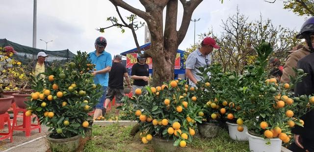 Chợ hoa Đà Nẵng 29 Tết: Quất cảnh đắt hàng, mai thưa khách - 1