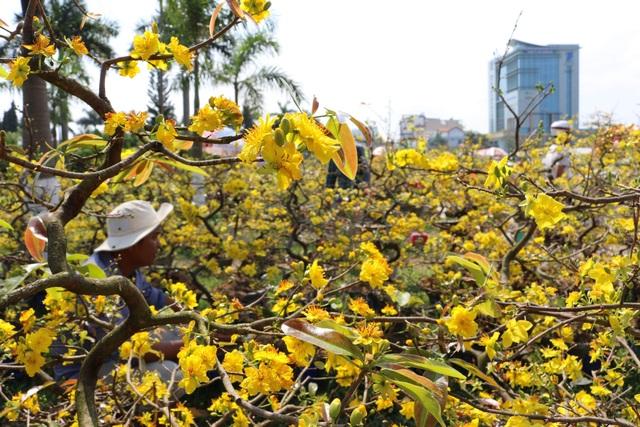 Chợ hoa 30 Tết: Hoa nở rộ mà lòng người bán hoa thì héo - 1