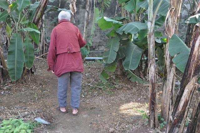 Nghẹn đắng cảnh cha già chống gậy đi tìm con trong bụi chuối - 2