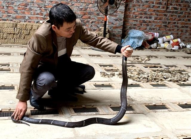 Tóm cổ rắn độc: Ông lão ôm vàng ròng đổi lấy 'siêu xe' - 2