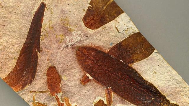 Nạn nhân đầu tiên của thảm hoạ tuyệt chủng lớn nhất trên Trái Đất là... thực vật - 1