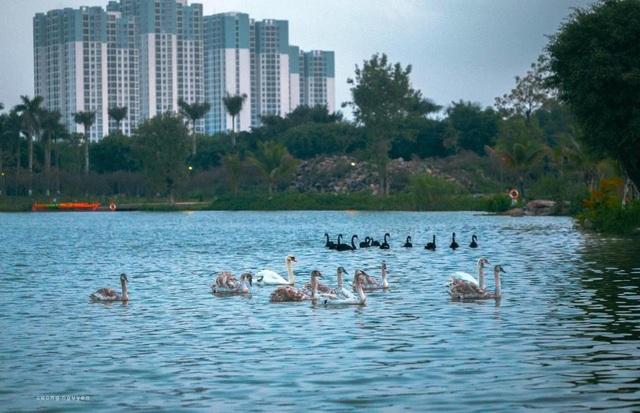 Người Hà Nội đổ xô đến Ecopark ngắm thiên nga, chèo thuyền Kayak  - 1