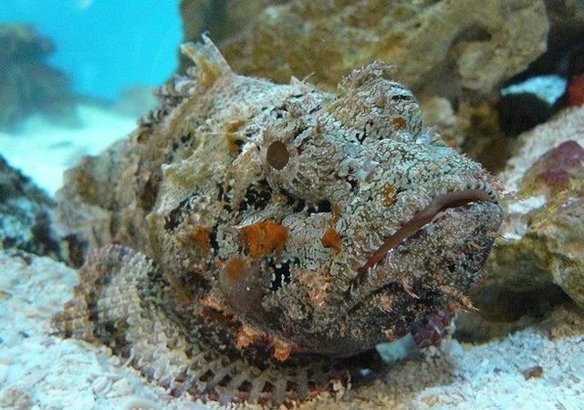 Cá mặt quỷ độc nhất thế giới bỗng xuất hiện ở bãi tắm đông người  - 1