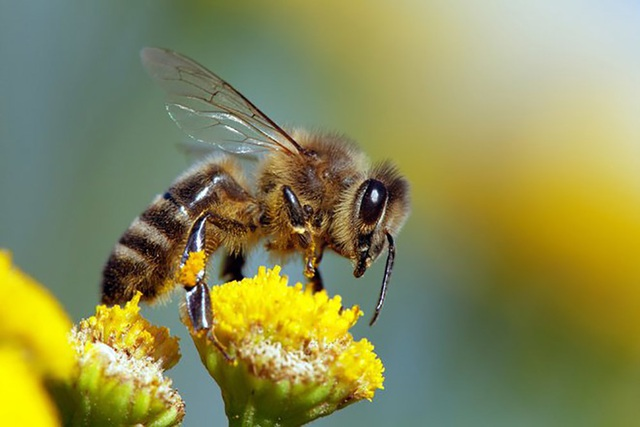 Loài ong có thể học… giải được toán - 1