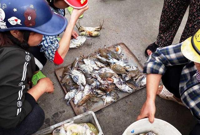 """Thanh Hoá: Ngư dân đón """"lộc biển"""" đầu năm - 7"""