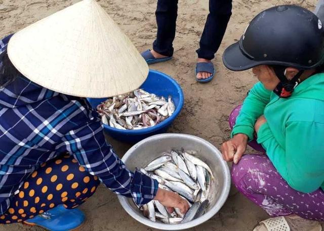 """Thanh Hoá: Ngư dân đón """"lộc biển"""" đầu năm - 11"""