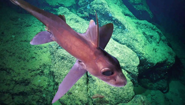 Hàng loạt loài mới được tìm thấy ở khu vực biển sâu ở Costa Rica - 1