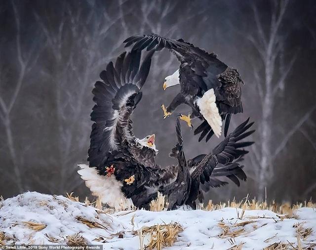 Những bức ảnh ấn tượng của Giải thưởng nhiếp ảnh 2019 - 2