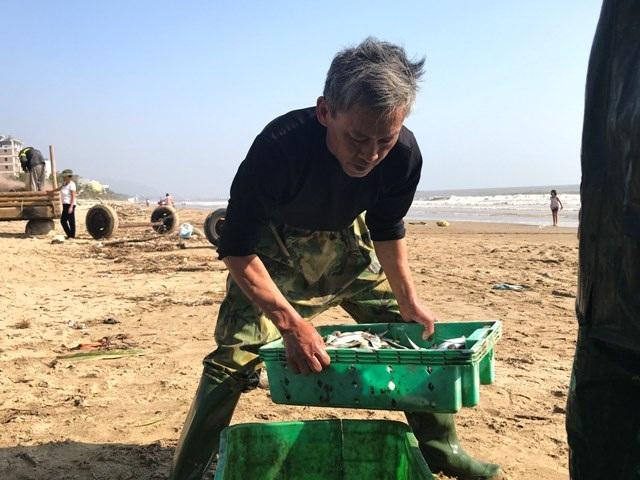 """Thanh Hóa: """"Xông"""" biển đầu năm từ 2h sáng, ngư dân trúng đậm cá - 5"""