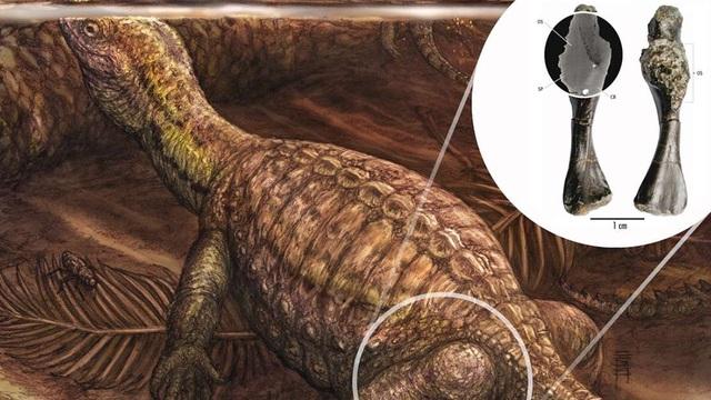 Ung thư xương ác tính được phát hiện có từ loài rùa Kỷ Trias  - 1