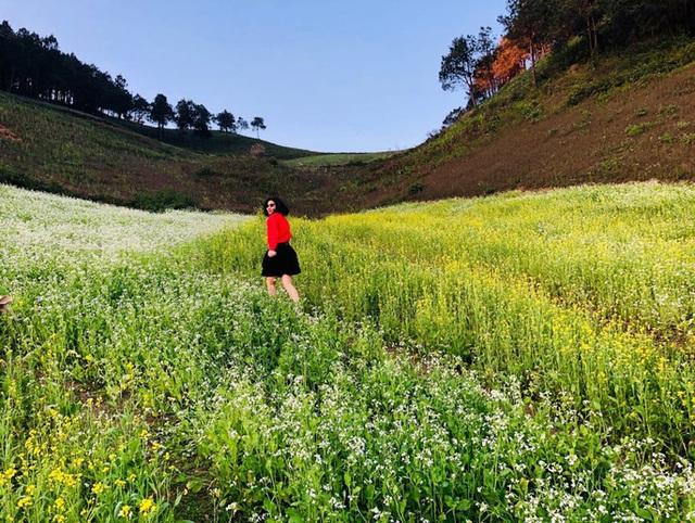 Mê mẩn những cánh đồng hoa đẹp như thiên đường ở Mộc Châu - 4
