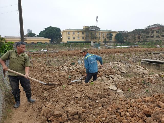 Người trồng đào Phú Thượng tất bật chuẩn bị vụ mới - 5