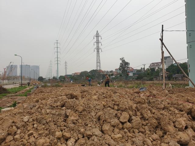 Người trồng đào Phú Thượng tất bật chuẩn bị vụ mới - 3