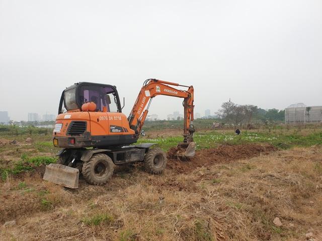 Người trồng đào Phú Thượng tất bật chuẩn bị vụ mới - 4