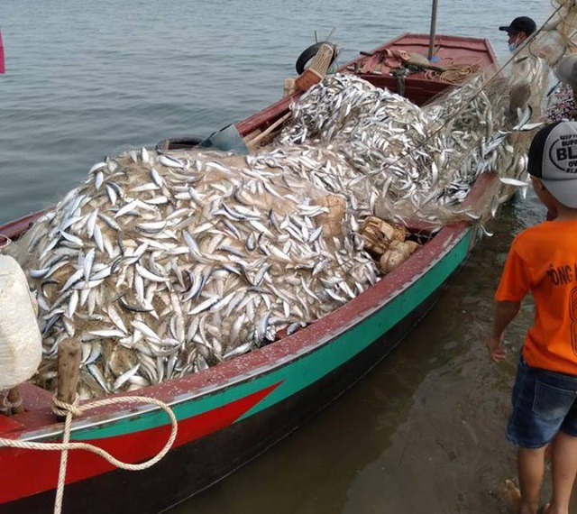Trúng mẻ cá khủng 100 tấn ngày đầu năm, thu về gần 6 tỷ đồng - 4