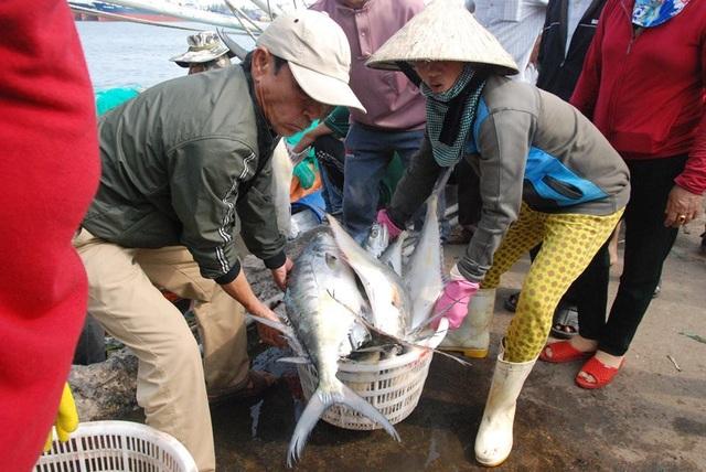 Trúng mẻ cá khủng 100 tấn ngày đầu năm, thu về gần 6 tỷ đồng - 3