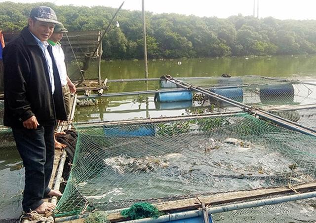 Thu tiền tỷ nhờ nuôi cá lồng bè, người dân xóm chài kéo dài ngày Tết - 2
