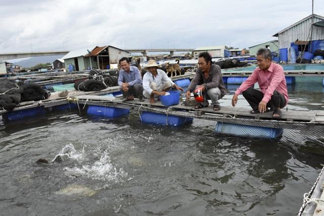 Thu tiền tỷ nhờ nuôi cá lồng bè, người dân xóm chài kéo dài ngày Tết - 1