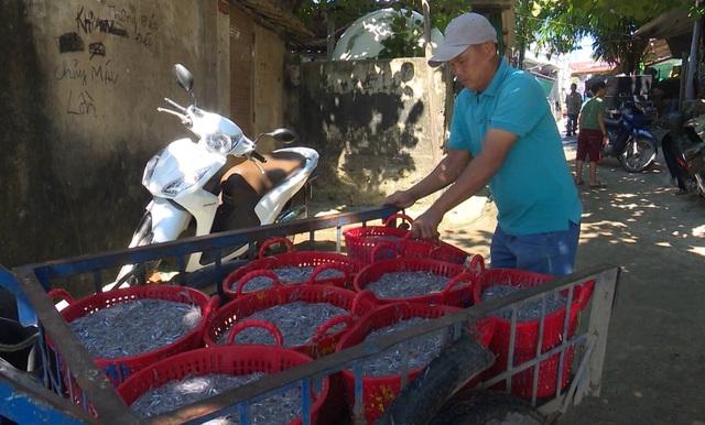 Trúng đậm cá cơm, ngư dân thu hàng chục triệu đồng mỗi chuyến biển - 2