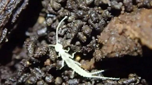 Những sinh vật chưa từng được biết đến có thể bị nhốt trong hang tối từ thời kỳ băng hà - 1