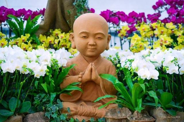 Ninh Bình: Thung lũng hoa 15ha khoe sắc - 3