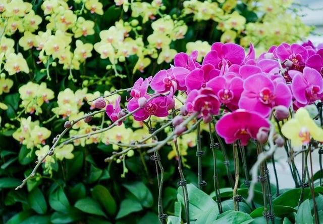 Ninh Bình: Thung lũng hoa 15ha khoe sắc - 14