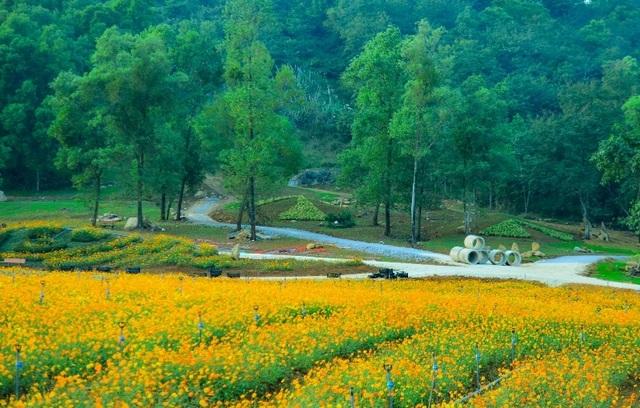 Ninh Bình: Thung lũng hoa 15ha khoe sắc - 5