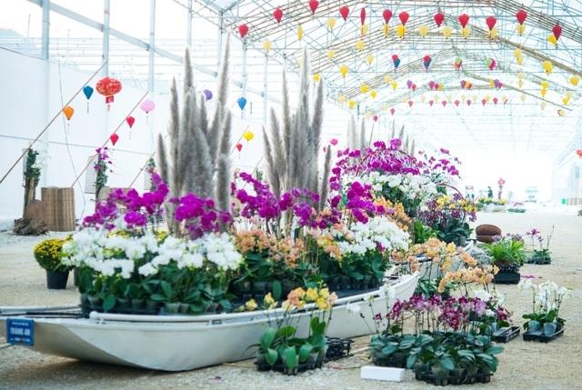 Ninh Bình: Thung lũng hoa 15ha khoe sắc - 8