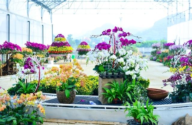 Ninh Bình: Thung lũng hoa 15ha khoe sắc - 10