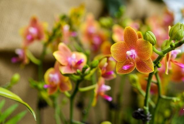 Ninh Bình: Thung lũng hoa 15ha khoe sắc - 16