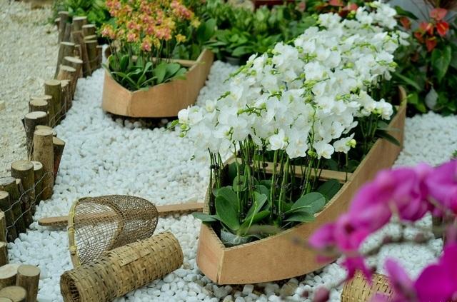 Ninh Bình: Thung lũng hoa 15ha khoe sắc - 11