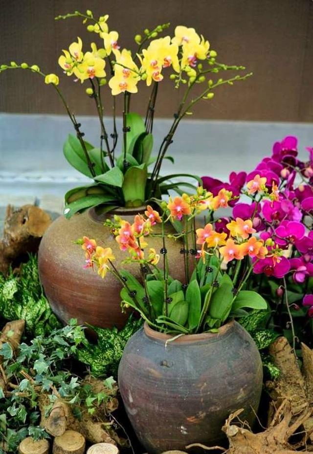 Ninh Bình: Thung lũng hoa 15ha khoe sắc - 15