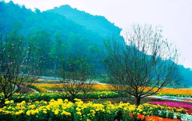 Ninh Bình: Thung lũng hoa 15ha khoe sắc - 4