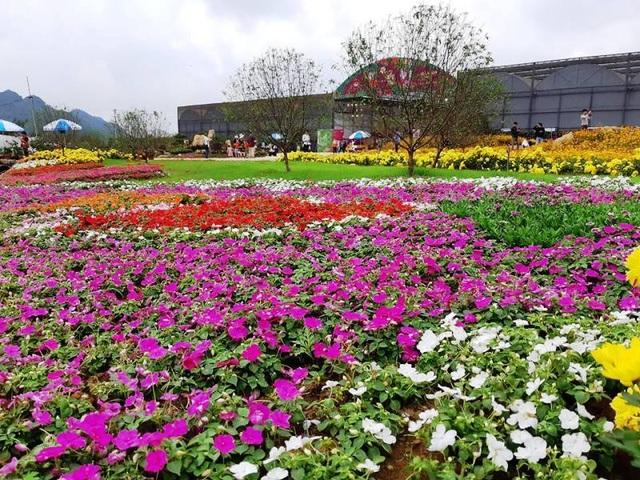 Ninh Bình: Thung lũng hoa 15ha khoe sắc - 2