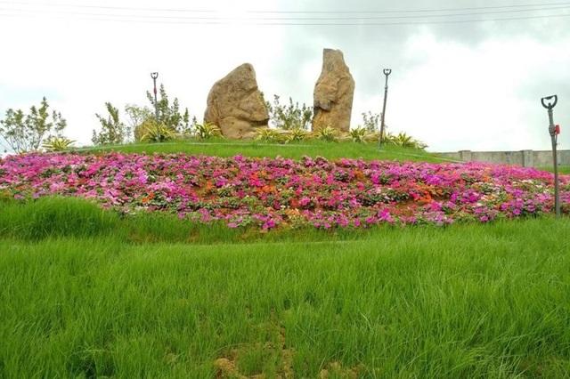 Ninh Bình: Thung lũng hoa 15ha khoe sắc - 7