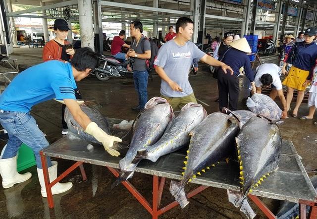 Khánh Hòa: Bỏ Tết để đi biển, ngư dân được lộc khủng đầu năm - 1
