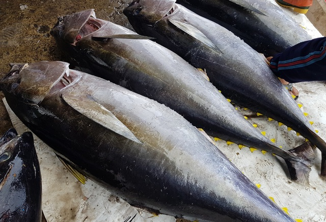 Khánh Hòa: Bỏ Tết để đi biển, ngư dân được lộc khủng đầu năm - 2
