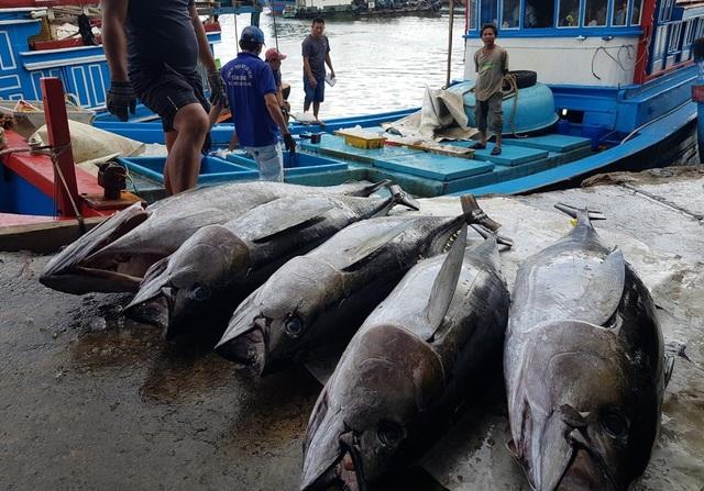 Khánh Hòa: Bỏ Tết để đi biển, ngư dân được lộc khủng đầu năm - 5