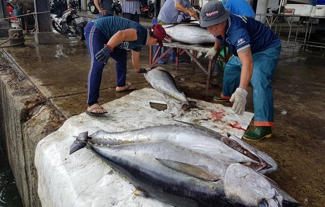 Khánh Hòa: Bỏ Tết để đi biển, ngư dân được lộc khủng đầu năm - 3