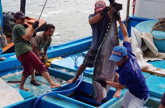 Khánh Hòa: Bỏ Tết để đi biển, ngư dân được lộc khủng đầu năm - 7