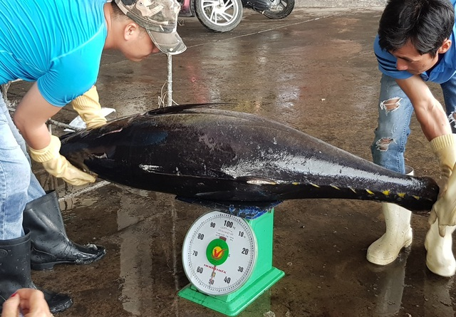 Khánh Hòa: Bỏ Tết để đi biển, ngư dân được lộc khủng đầu năm - 4